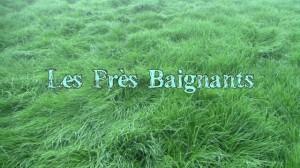 Les près baignants – Vidéo sur la vallée de l'Orbiquet